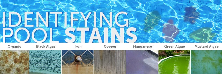 Identifying Pool Stains Inyopools Com