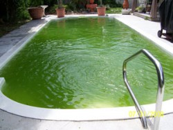swimming-pool-algae-1