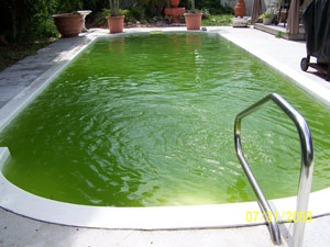 How To Clean A Green Pool