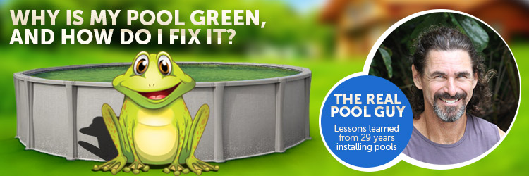 Your Above Ground Pool Is Green And It Has Frogs