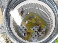 Blog Image - Pump Basket Leaves (200 x 200)