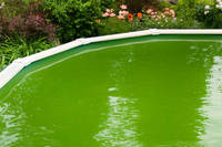 Blog Image - Green Algae (200 x 200)