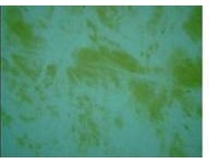 Blog Image - Yellow Algae (200 x 200)