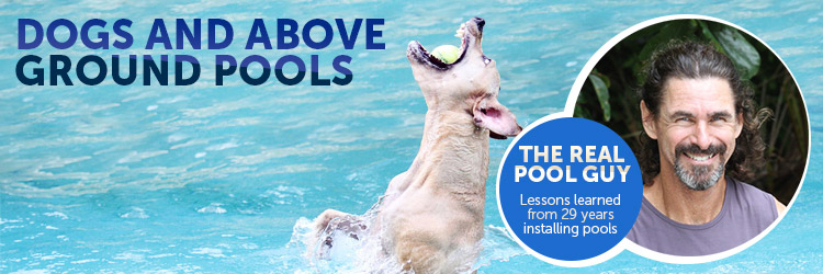 Dogs And Above Ground Pools