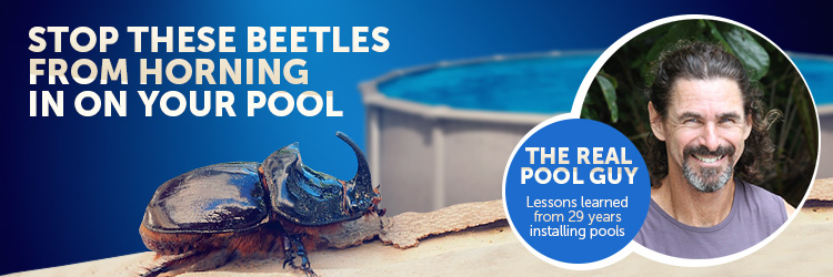 horn nosed beetles broke my pool