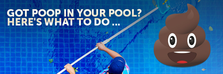 how to remove poop from pool