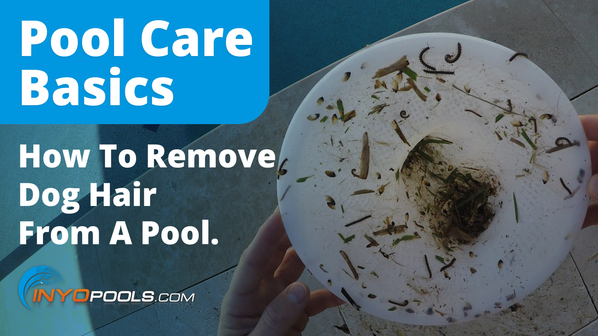 How To Remove Dog Hair From Your Pool